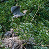 DSC_9307 heron's nest