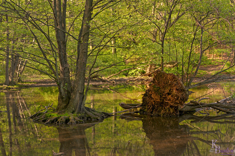 One of my favorite places to photograph when I moved to Staten Island over 20 years ago, I would now  reacquaint myself with Clove Lake using my new D300. Unfortunately while my 18-50mm Sigma zoom lens I used to take this photo took fabulous quality macro shots, it's performance from medium distances out left MUCH to be desired. I had to edit the heck out of this shot to get it this sharp. Many other nice shots I took with it were just so soft it was a hopeless waste of time to edit. Finally I couldn't take it any more and purchased Nikon's 16-85mm f3.5-5.6, and have been deliriously happy ever since. (Though yes a bit poorer.) Once again as in the old days putting a non Nikon lens on my camera led to nothing but disappointment. I told myself I'd never do it again if I can get the same lens in a Nikon. Though I must say my Tokina 12-24mm F4 is AMAZING!!!! I reach for it now without even flinching. Too bad I didn't use it on this shot. Even though I would have had to crop it down significantly, I bet it still would have given me better results. <br /> <br /> (As a later note I eventually traded in that Sigma 18-50mm f2.8 macro for Sigma's less ambitious 17-70mm 3.5-5.6 macro, and I must say it is one hell of a lens that I now use all the time with nothing but great results. Wish I had it for this one as by the time I did, the passing of time had destroyed the delicate quality that made this scene so special. As I've said many a time, you usually only get one shot at capturing a great photo).