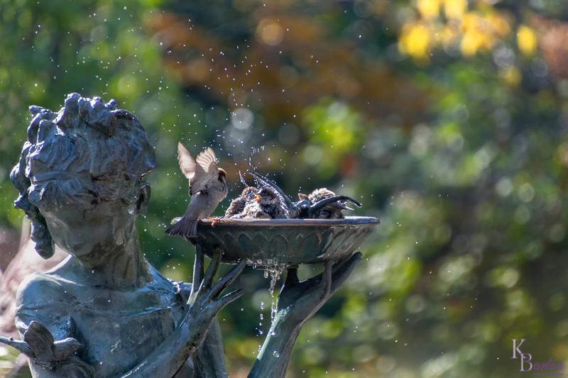 DSC_3043 Secret Garden bird bath fountain