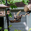 DSC_2699 backyard bird feeder