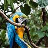 DSC_8414 macaw