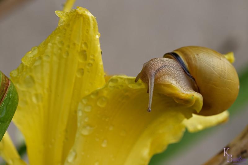 DSC_6709 snails in my garden_DxO