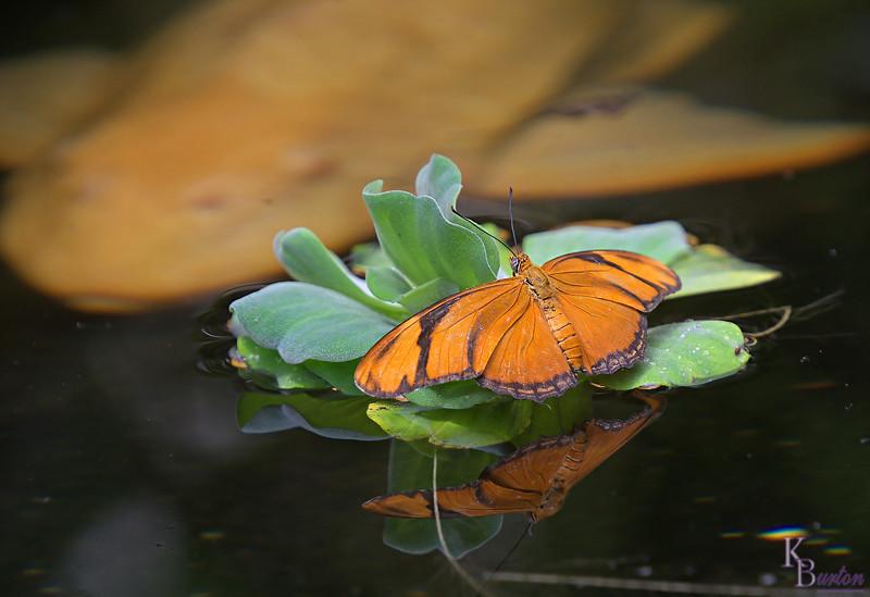 DSC_0823 scenes from the butterfly gardens-TSt_DxO