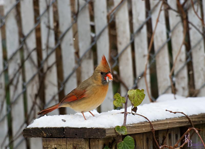 DSC_3931 backyard visitors_DxO