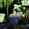 DSC_7664 backyard visitors