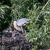 DSC_7207 heron's nest