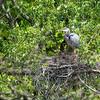 DSC_7298 heron's nest