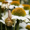 DSC_4556 a snails pace