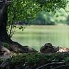 DSC_8589 Martling lake_DxO