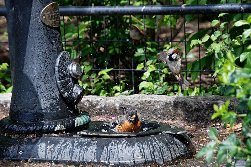 DSC_2477 bird bath_DxO
