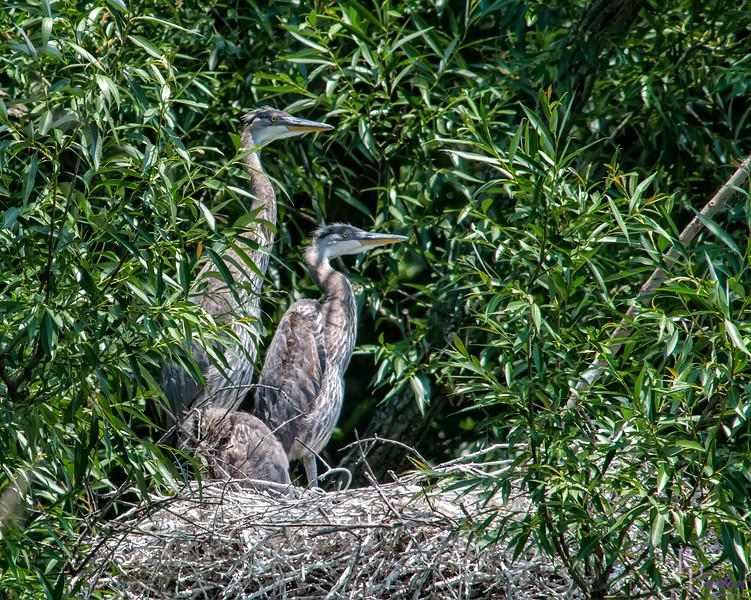 DSC_9020 heron's nest