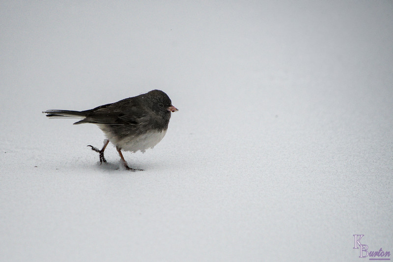 I wasn't the only one braving the wind and icy conditions of this latest winter storm today.