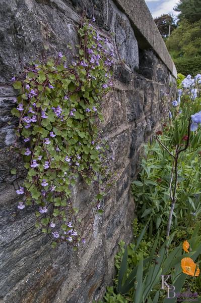 DSC_5543  Herb Gardens Wave hill