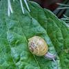 DSC_9510 snails pace