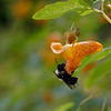 DSC_9654 hunting for nectar_DxO