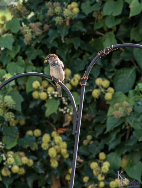 DSC_5663 backyard bird feeder