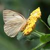 dsc_6780 inhabitants of Butterfly Gardens