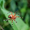 DSC_9649 building a web