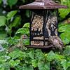 DSC_0097 backyard bird feeder