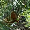 DSC_8112 robin's nest