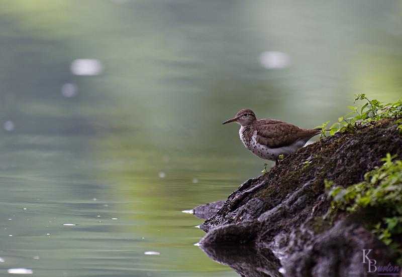 DSC_0099 rainy day at Clove lakes_DxO