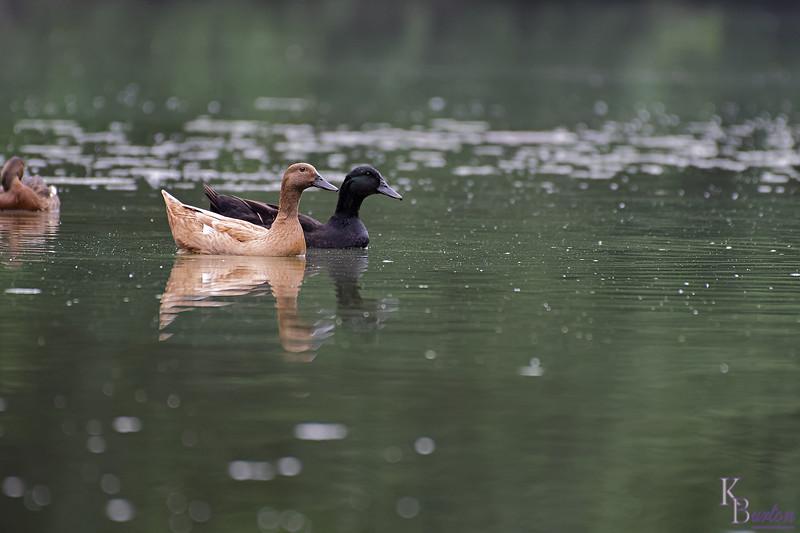 DSC_9843 rainy day at Clove lakes_DxO