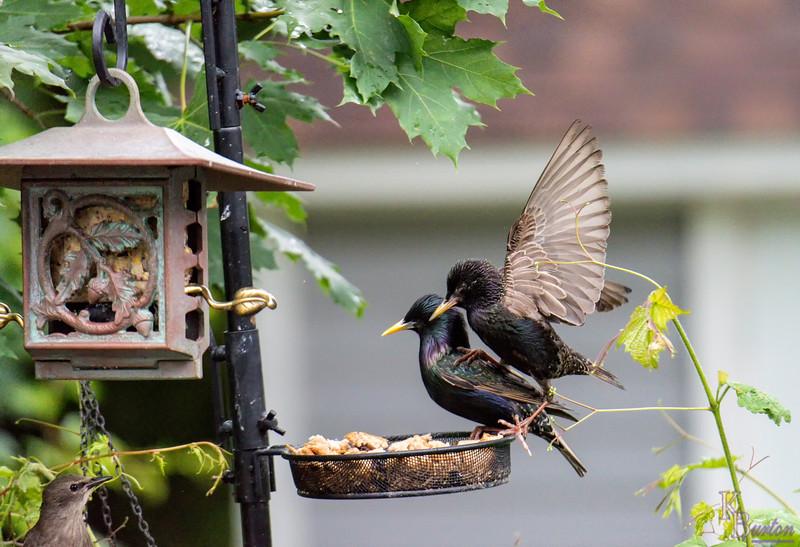 DSC_4535 backyard bird feeder