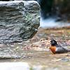 dsc_5445 natures bird bath