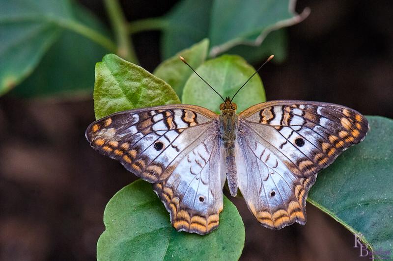 DSC_7316 scenes from Butterfly Gardens