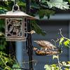 DSC_4880 backyard bird feeder