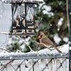 DSC_9701 winter scenes from my backyard