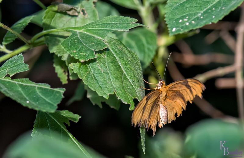 DSC_7290 scenes from Butterfly Gardens