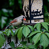 DSC_5402 backyard visitors_DxO