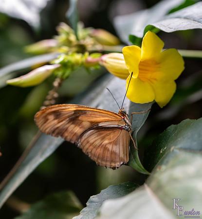 DSC_3391 scenes from Butterfly Gardens