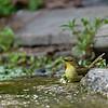 DSC_1291 bird bath
