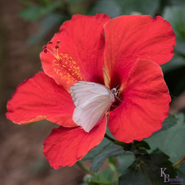 DSC_4792 scenes from butterfly gardens