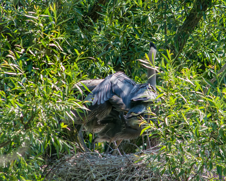 DSC_8952 heron's nest