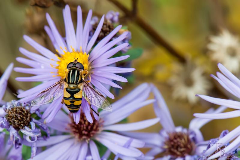 Flowerflys