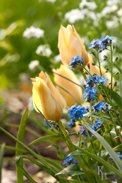 DSC_5430 spring flowers