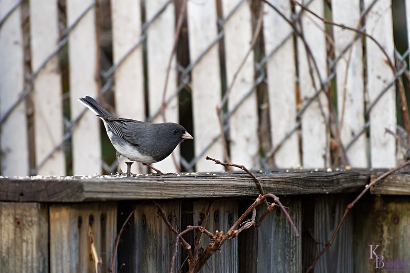 DSC_6578 backyard vistors_DxO