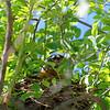 DSC_0828 robin's nest_DxO