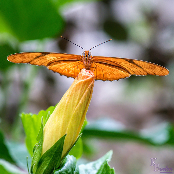 DSC_4770 scenes from butterfly gardens