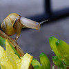 DSC_7907 snails in my garden_DxO