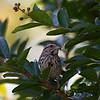 DSC_9254 sparrow_DxO