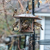 DSC_7753 rainy day at the bird feeder