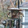 DSC_7753 rainy day at the bird feeder