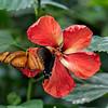 DSC_3009 scenes from butterfly gardens