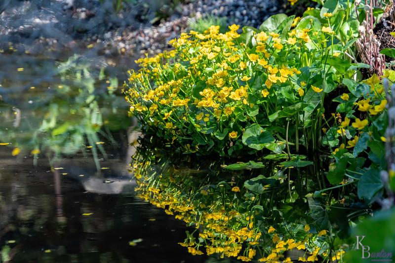 DSC_1094 reflections