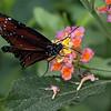 DSC_1259 scenes from Butterfly Gardens