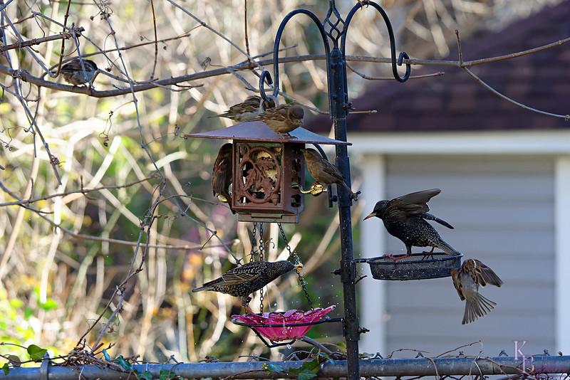 DSC_3525 backyard visitors_DxO